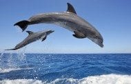 Dolphins and their Babies