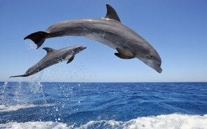 common_bottlenose_dolphins-1280x800