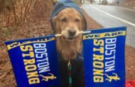 We humbly request Spencer the dog to cheer us on at all future events