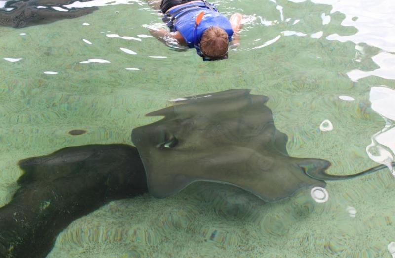 Gulfarium 's Stingray Bay Exhibit Resurfaces After Major Renovations