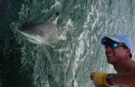 Looking for a Challenge?  Try Shark Fishing in Destin
