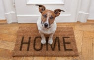 In real estate, man's best friend is often calling the shots