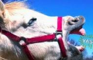 Meet Tango, the weirdest horse on Twitter