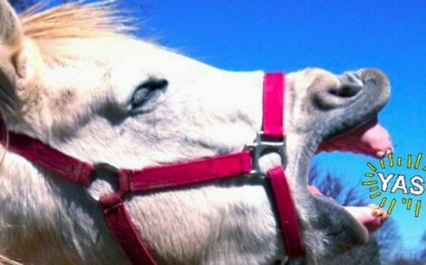 Meet Tango, the weirdest horse on Twitter