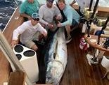 Local anglers haul in massive bluefin tuna at Billfish Classic