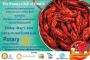 9th Annual Destin Rotary Cajun Crawfish Bash